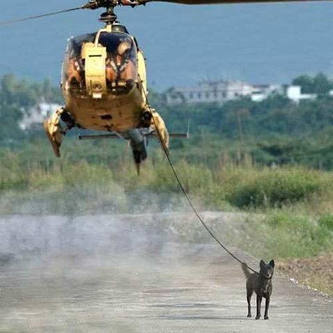 caolicoptero